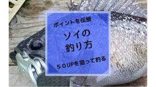 ソイ釣り方