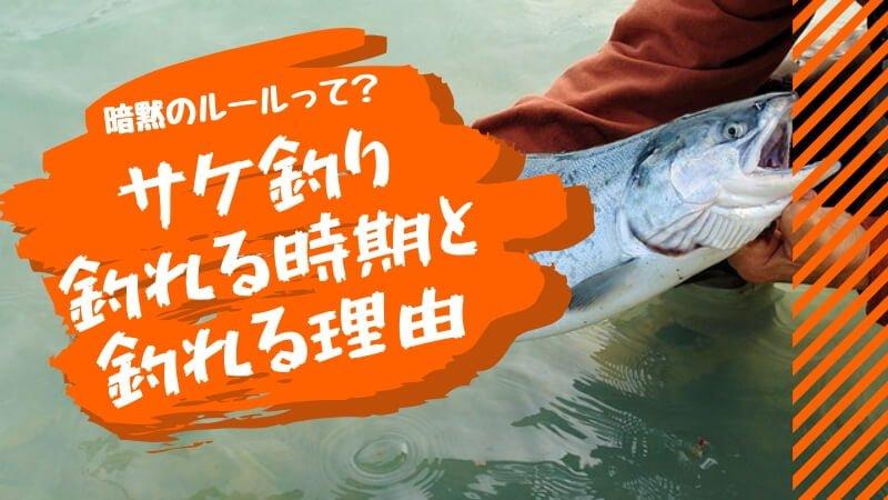 鮭釣れる時期と理由。暗黙のルールって?