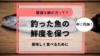 釣った魚の鮮度を保つ締め方