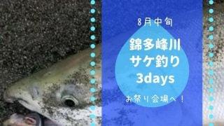 錦多峰川サケ釣り8月中旬