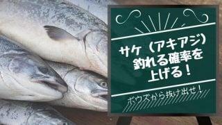 サケ(アキアジ)釣れないボウズ